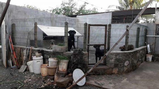 Non-renouvellement de permis : une éleveuse de chiens interdite de les vendre