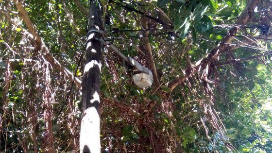 Route Abattoir à Roche-Bois : l'abattage d'un arbre se fait attendre