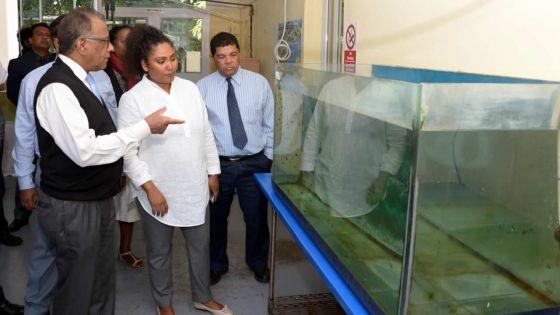 Sunil Bholah : «L'élevage de poissons décoratifs est un nouveau créneau à exploiter»
