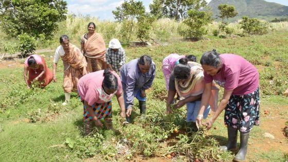 Métier : cultiver son amour pour la terre