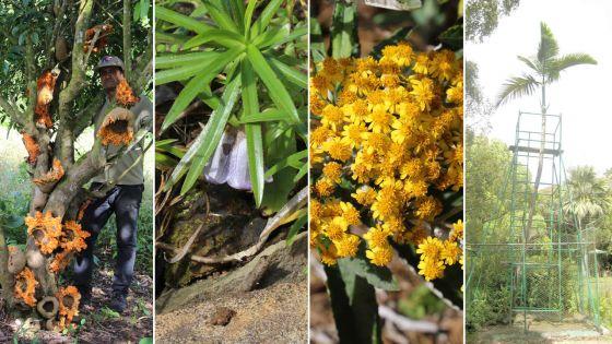 Plantes endémiques : 125 espèces sont menacées d'extinction