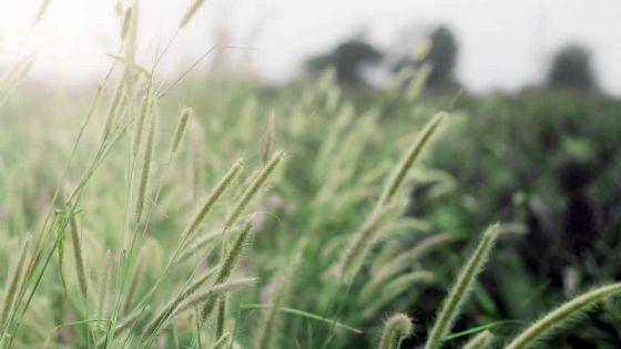 Commission Justice et Paix : appel à la création d'un ministère dédié à l'écologie