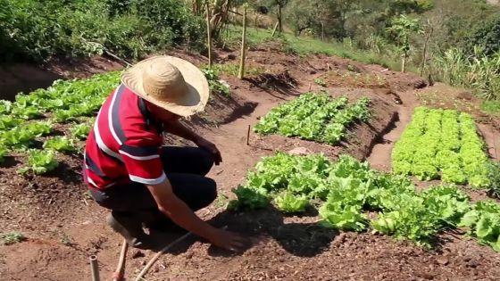 Post-cyclone intense Gelena : Le ministère de l'Agro-industrie et la Banque de Développement au chevet des plantations de cultures à Rodrigues
