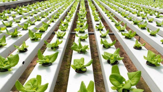 Nouvelle technologie : l'agriculture hydroponique en sera la bénéficiaire