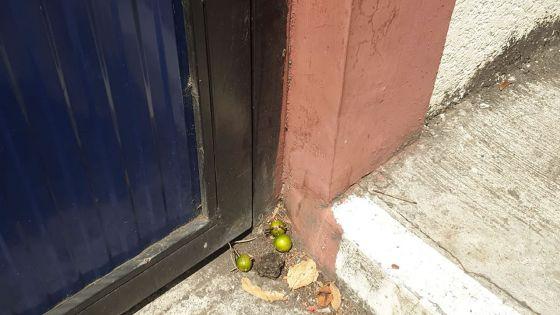 Insolite : un «système limon» à l'extérieur de l'école primaire Rajiv Gandhi à Flacq