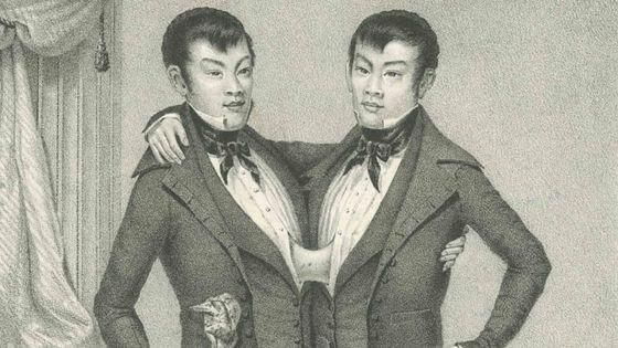 Siamois - Un Brin d'histoire - Eng et Chang : les premiers siamois répertoriés en 1811