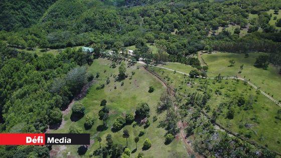 Environnement : la superficie totale des forêts a diminué d'environ 20 hectares à Maurice