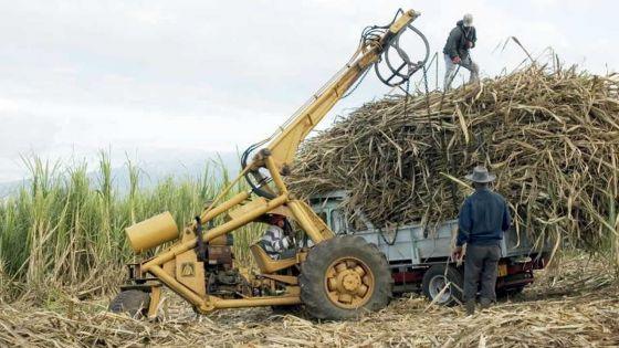 Industrie sucrière : assistance financière aux grands planteurs et usiniers