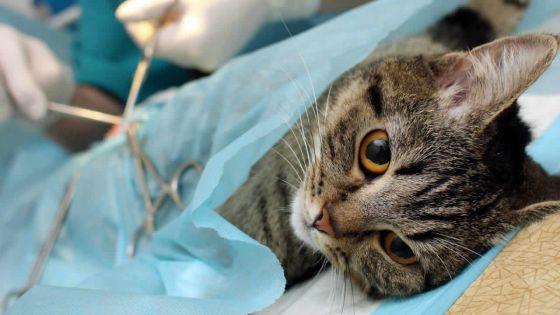 Il attend plusieurs mois avant de pouvoir stériliser son chat