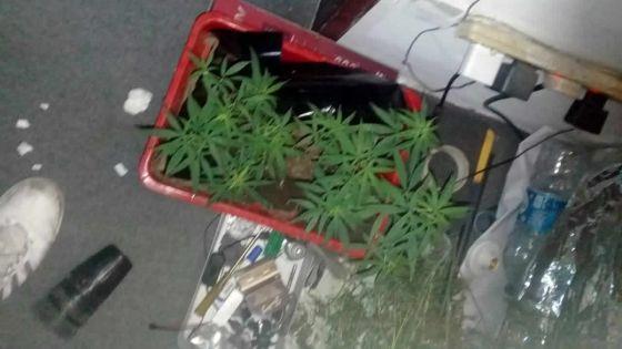 Bramsthan : un homme de 26 ans cultivait du cannabis chez lui