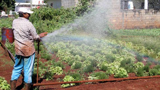 Gelena : les pluies bénéfiques à la culture, mais la chaleur menace