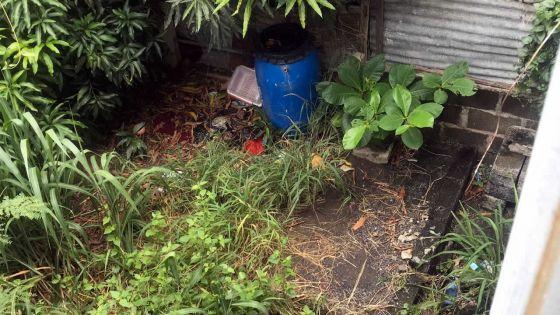 Savanne : le problèmedes terrains en friche