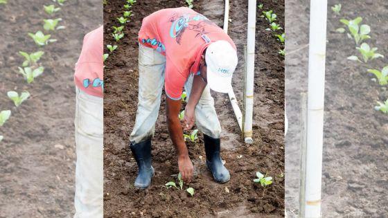 Propositions budgétaires : des mesures pour un nouveau souffle aux petits planteurs