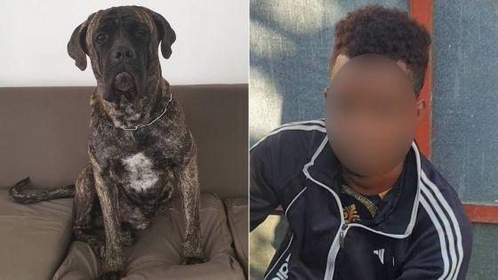 Un voleur de légumes surpris par le chien du propriétaire, un redoutable Cane Corso nommé Salah