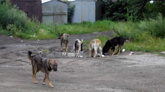 Abus : elle dénonce la maltraitance des animaux domestiques
