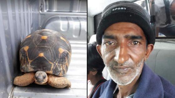 Port-Louis : deux individus volent une tortue âgée de 40 ans