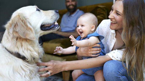 Préparez votre chien à l'arrivée d'un bébé