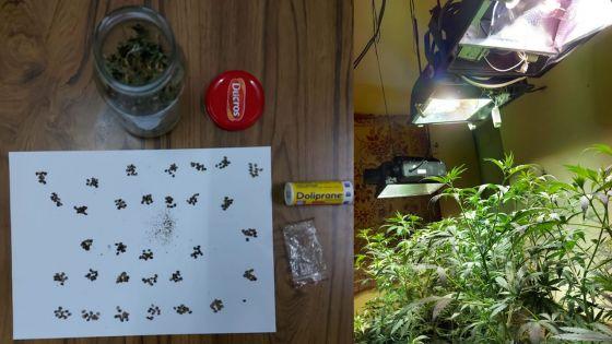 La Tour Koenig : un pêcheur avait converti une pièce de sa maison en culture «indoor» de cannabis