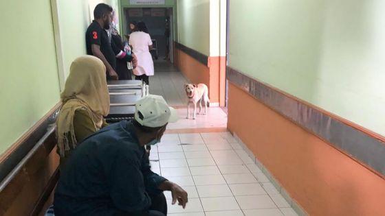 Hôpital Victoria : chien en visite