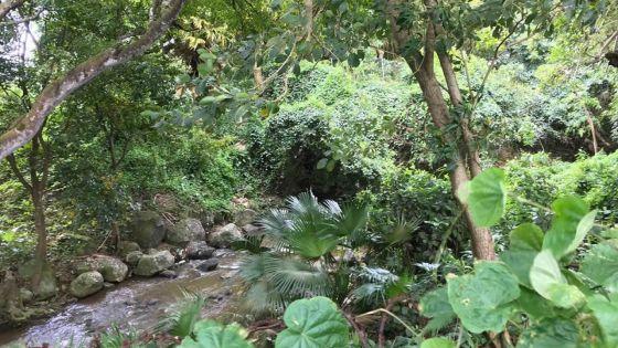 Robinson no 2, Phoenix : Rivière-Sèche et ses berges laissées à l'abandon