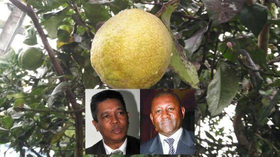 Importation des limons de Rodrigues : pressions pour la levée de l'embargo