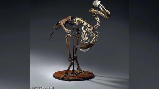 Christie's met en vente un squelette de dodo à Rs 18 millions