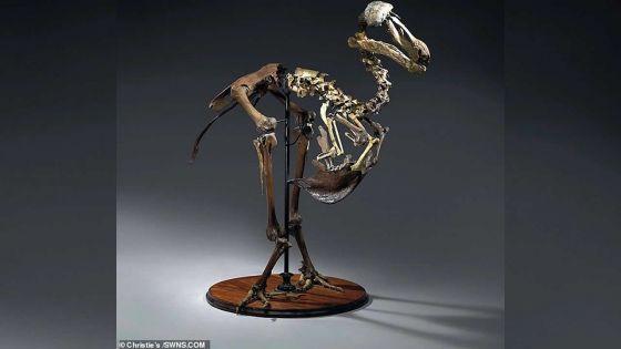 Enquête d'Interpol réclamée : Emmanuel Richon redoute un «trafic» d'os de dodos