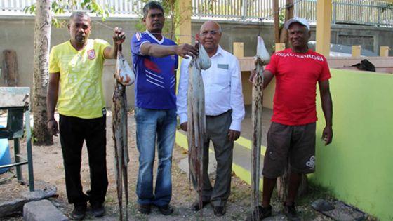 Prem Koonjoo, ministre des Ressources marines : «La fermeture de la pêche à l'ourite sera relancée l'année prochaine»
