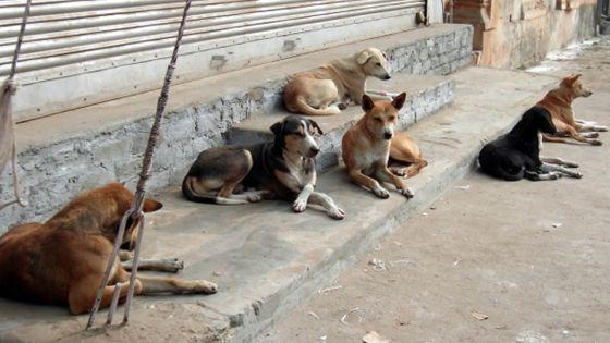 D'ici décembre : un plan d'action contre la prolifération des chiens errants