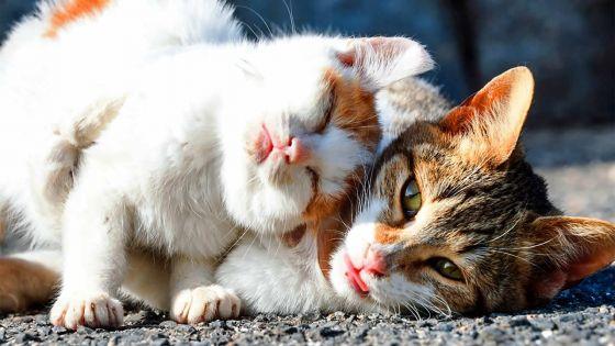 Par manque de vétérinaires à la MSAW : il attend de faire stériliser ses chats depuis plus de deux mois