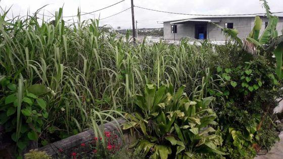 Camp-Caval, Curepipe : un terrain en friche appartenant à la CWA devient un repairepour les malfrats