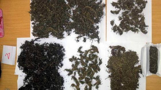 Trafic de drogue :4 000 semences et 350g de cannabis saisis chez un habitant de Laventure