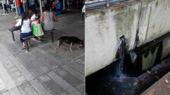 Chiens errants, WC qui débordent…Quand tout va à vau-l'eau au marché de Flacq