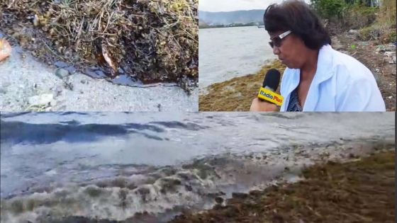 Pollution au mazout à Deux-Frères : «Nous vivons de la mer», dit Marie-Claire, effondrée