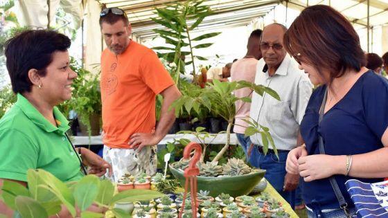 Exposition : dites-le avec des plantes chez Kendra