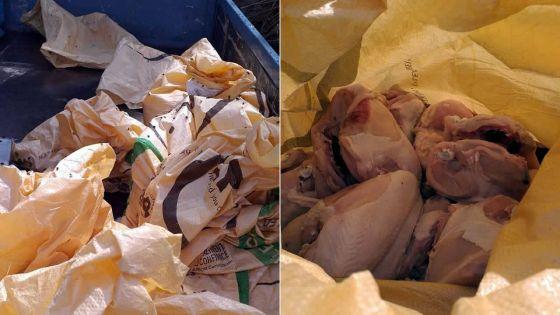 Dubreuil : 217 kilos de poulet avarié saisis par la police