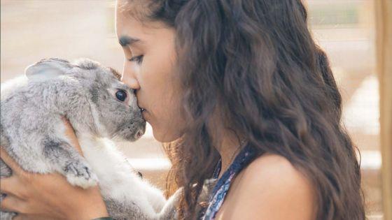 Il est possible d'adopter un lapin, au même titre qu'un chien ou un chat