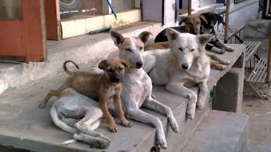 NHDC de Beau-Vallon : les escaliers squattés par huit chiennes