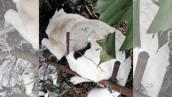 Maltraitance animale : un chien piégédans une trappe artisanale