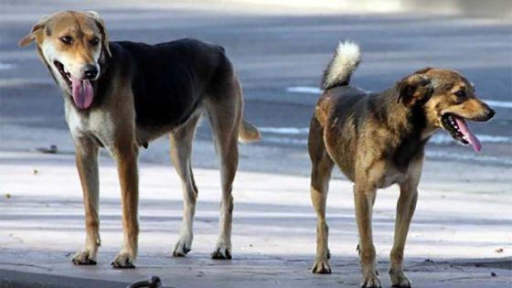 Guerre de voisinage : en rentrant chez eux, ils rencontrent des chiens enragés