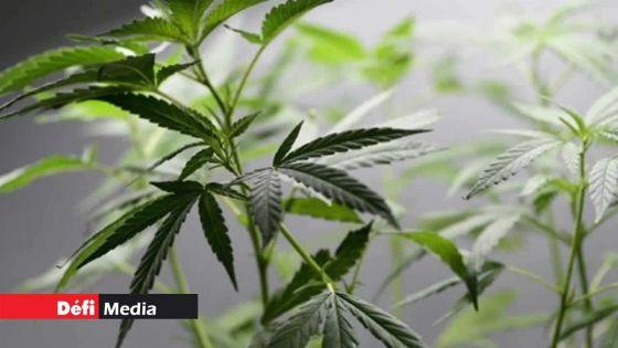 Drogue : dépénalisation, décriminalisationet légalisation : quelle différence ?