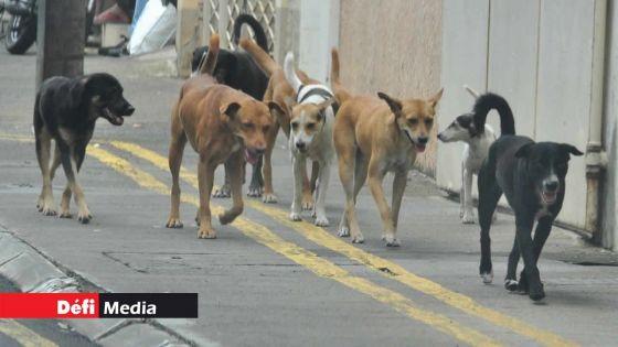Maltraitance des chiens : la MSAW dépose son affidavit