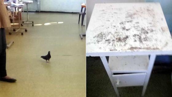 À l'hôpital Victoria, Candos : pigeons et cafards dans une salle d'hôpital