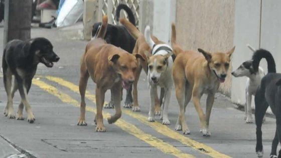 Mauritius Society for Animal Welfare : le ramassage des chiens se fait seulement en cas d'urgence