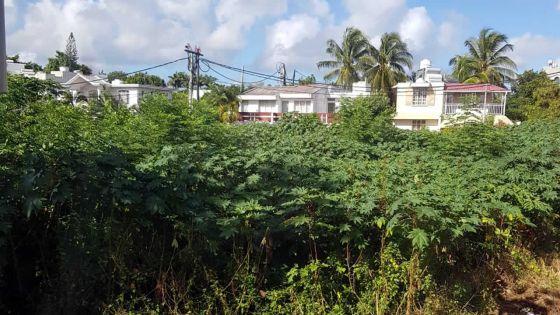 Morcellement Boucan, Mapou : deux terrains à l'abandon préoccupent les habitants