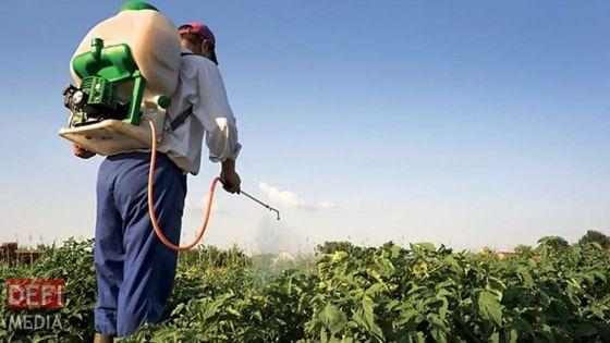 Pesticides : la réouverture des points de vente à l'étude