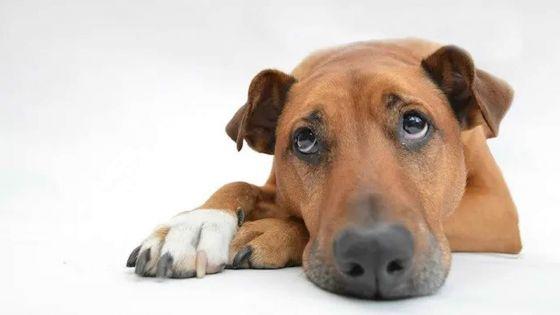 Empoisonnement allégué d'un chien