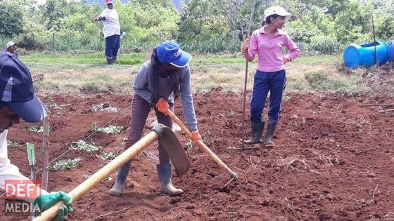 «Il faut mettre des terres à disposition des familles pauvres de Maurice» pour Manoj Seeborun