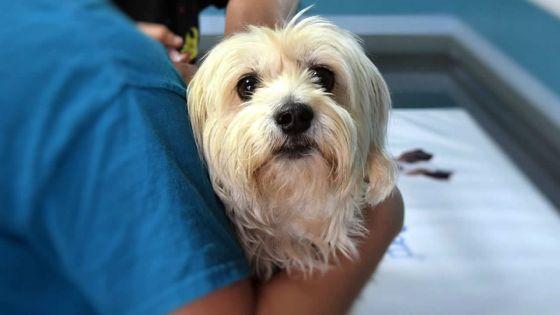 Confinement total : qui contacter si votre animal est malade ?