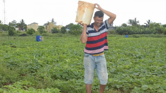 Hiran Ramjan,planteur passionné
